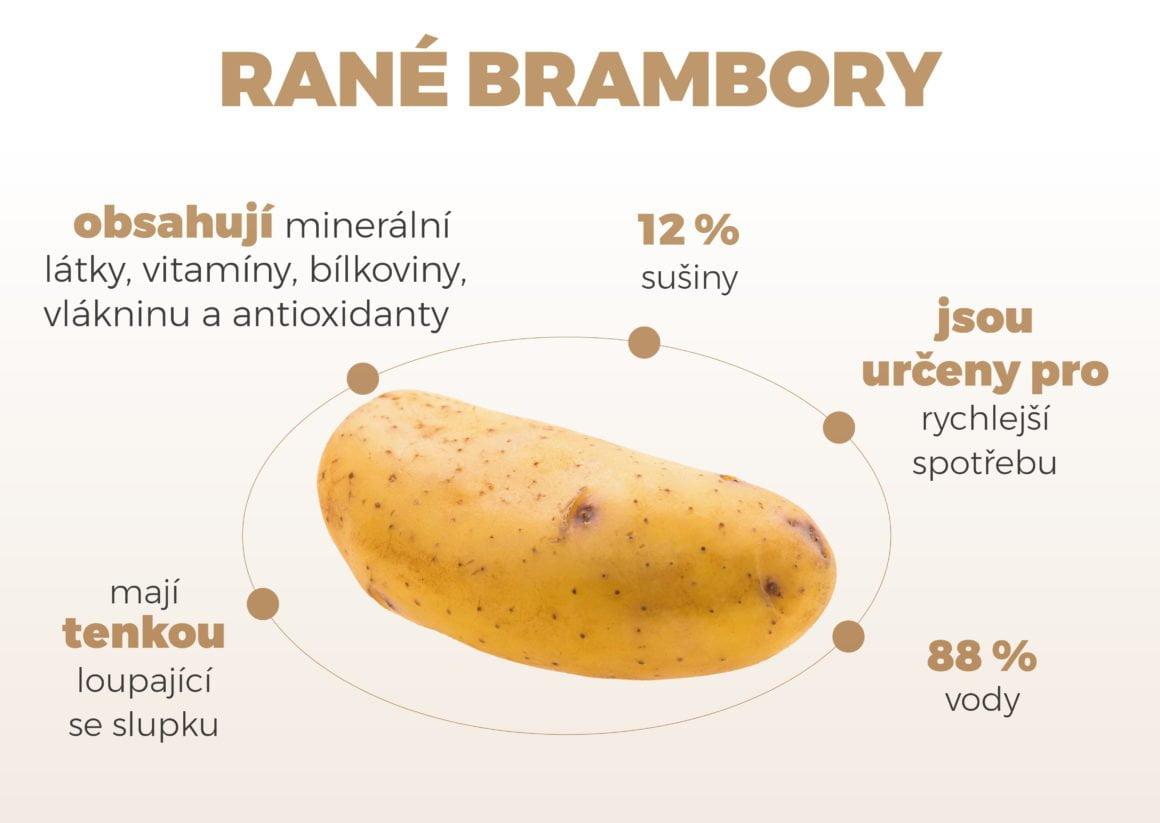 infografika rane brambory
